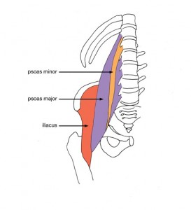 Psoas Muscle